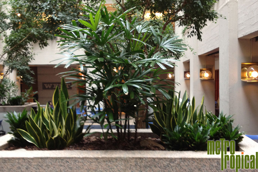 interior landscaping office. Contact Metro Tropical Plant Company Today To Learn More About Our Office Interior Installation And Maintenance Services At 617-216-5449 Or Click Landscaping