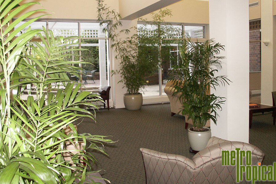 Interior Landscaping Office Plants Lexington Ma Metro Tropical 617 216 5449