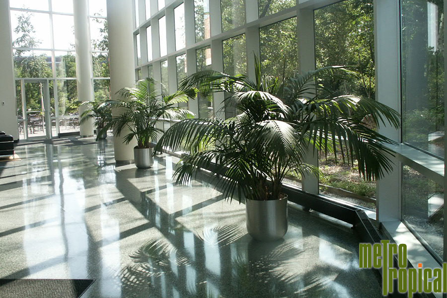 Interior Landscaping Office Plants Boston Ma Metro Tropical 617 216 6449