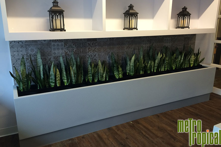 Interior Landscaping Office Plants Chelmsford Ma Metro Tropical 617 216 5449 Metro Tropical 617